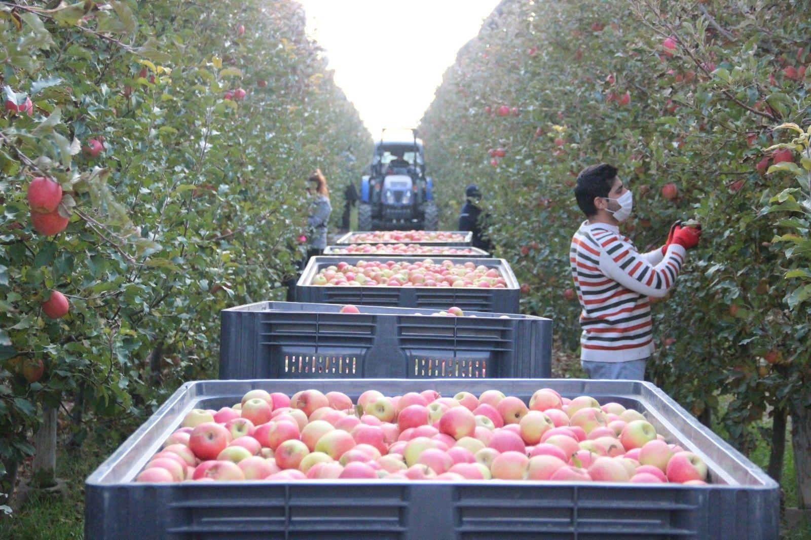 2021/09/karamanda-her-gun-13-bin-kisi-elma-toplamaya-gidiyor-20210915AW41-1.jpg