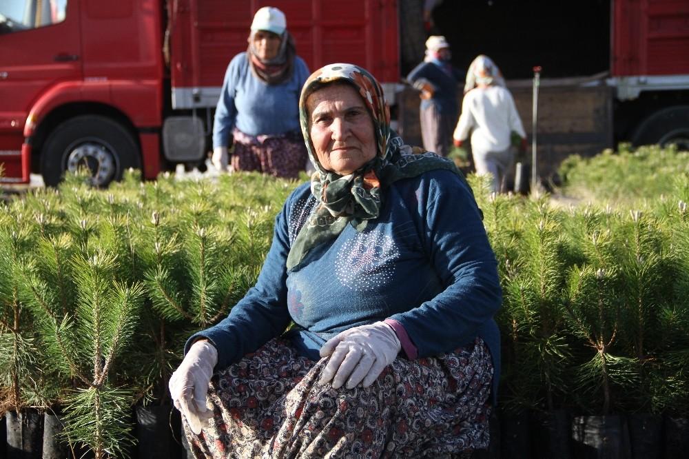 Türkiye'nin en büyük fidanlığından 40 şehre fidan
