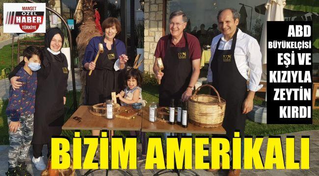 ABD Büyükelçisi zeytin hasadı yaptı