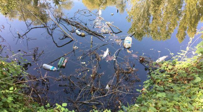 Yüzeyi çöplerle kaplanan Bartın Irmağında balık ölümleri