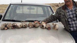 Kınalı keklikleri avladılar