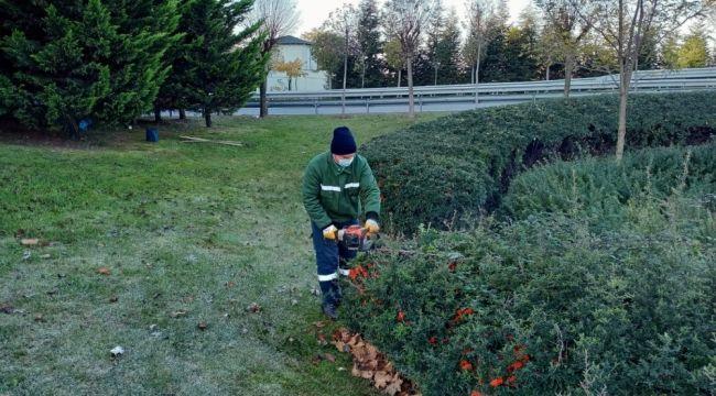 3 ilçenin ağaçları kış bakımına alındı
