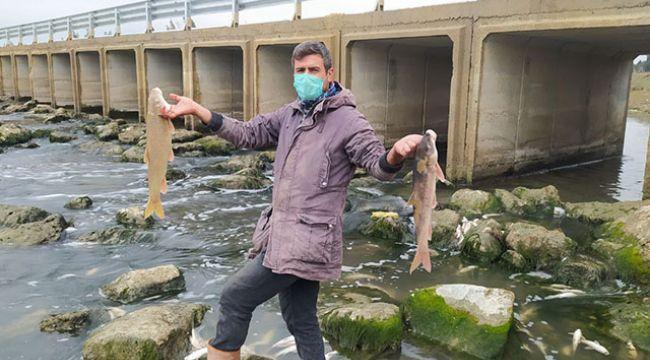 Bu balıklar neden öldü?