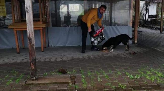 Kazancının yarısını sokak hayvanları için harcıyor