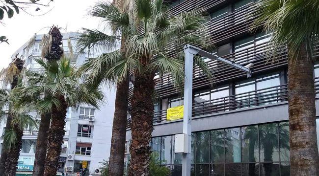 İzmir'in palmiyeleri kuruyor