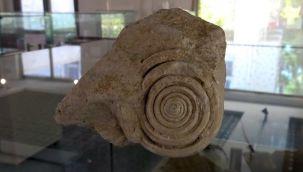 60 milyon yıllık fosil bulundu