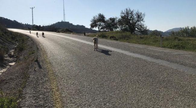 Bu nasıl belediyecilik? Köpekleri ölüme terketti