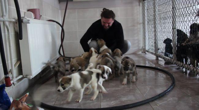 Sokak köpeği tek seferde 14 yavru doğurdu