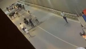 Yolu şaşıran inekler tüneli kapattı
