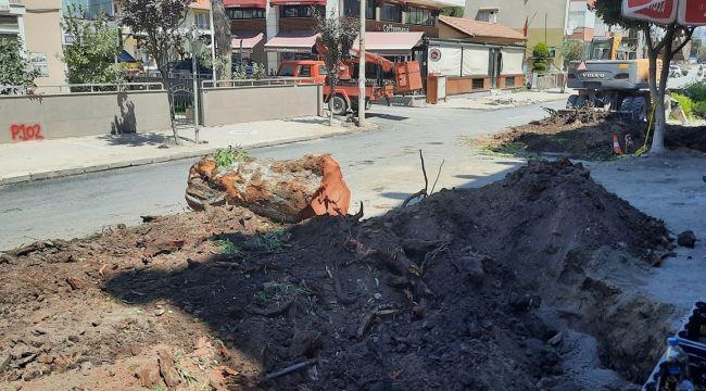 Belediye, Dikili'de 80 yıllık okaliptüs ağaçlarını kesti