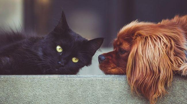 Sahipli kedi ve köpeklere pasaport