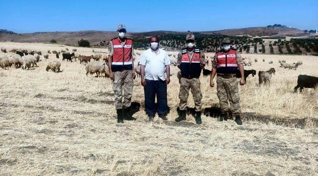 Kayıp çoban ve sürüsü drone ile 5 saatte bulundu