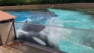 44 yıldır parkta tutulan balina intihara kalktı