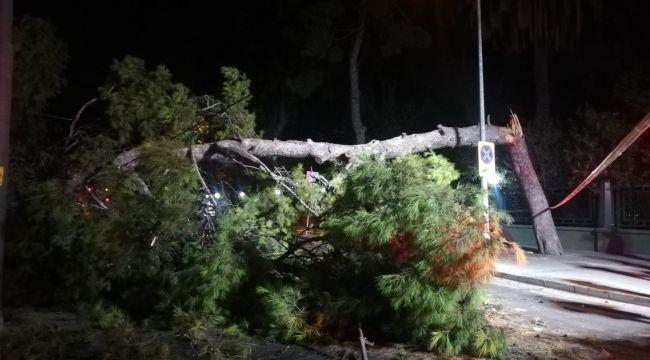 Devrilen çam ağacı, tramvay seferlerini durdurdu