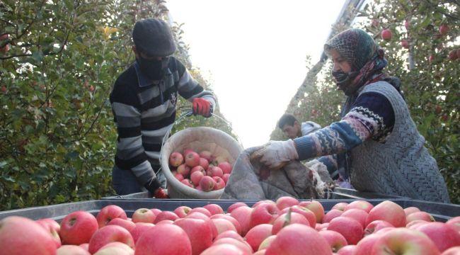 Karaman'da her gün 13 bin kişi elma toplamaya gidiyor