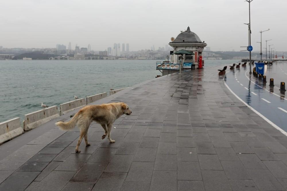 İstanbul Valisi Yerlikaya'dan sokak hayvanlarıyla ilgili paylaşım