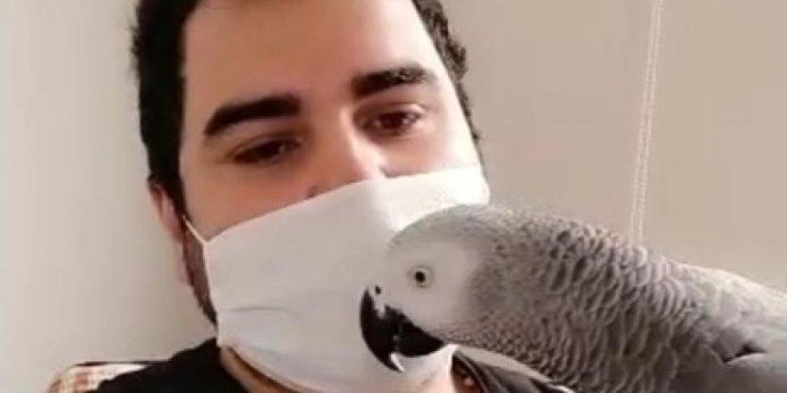 Sahibi korona virüse yakalanan papağan Pakize: Evde kal